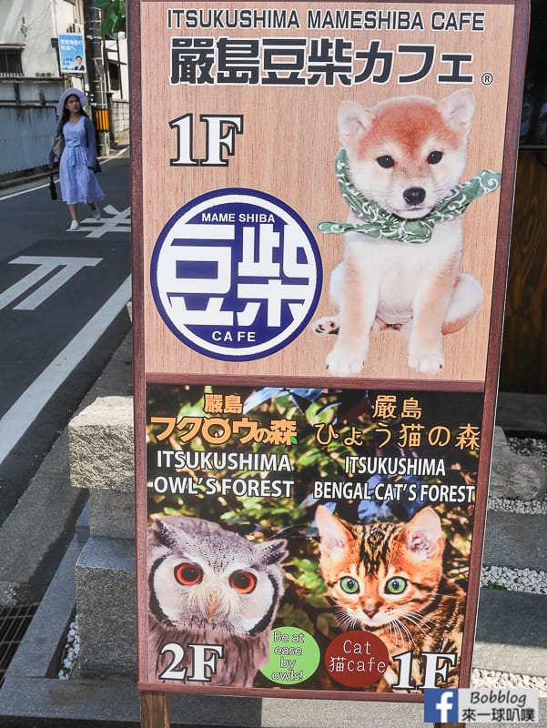 Miyajima-owls-cats-forest-14