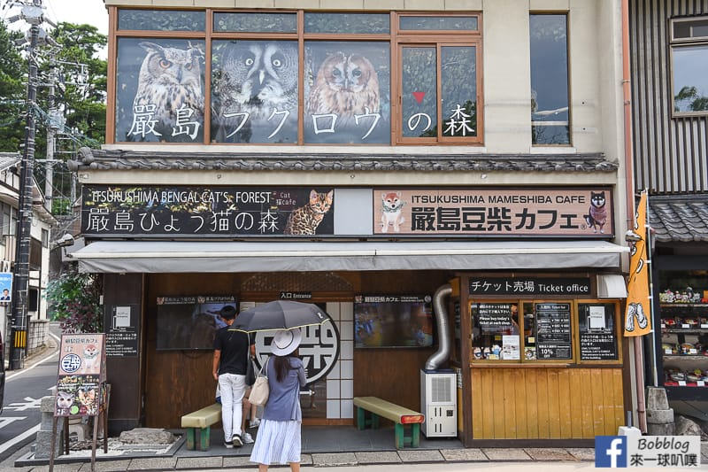 Miyajima-owls-cats-forest