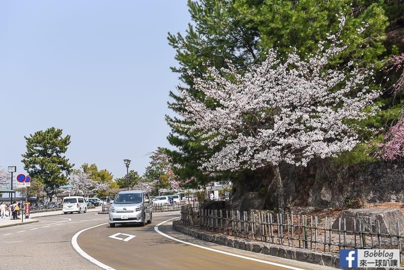 Miyajima-sakura-2