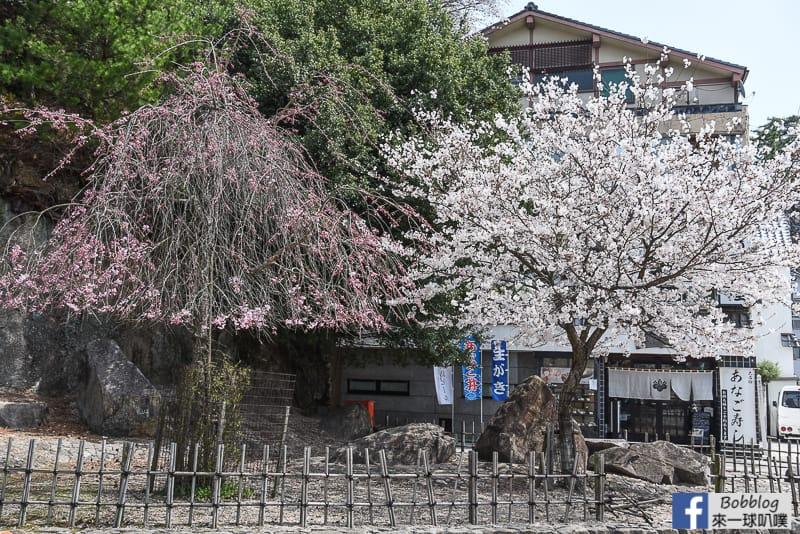 Miyajima-sakura