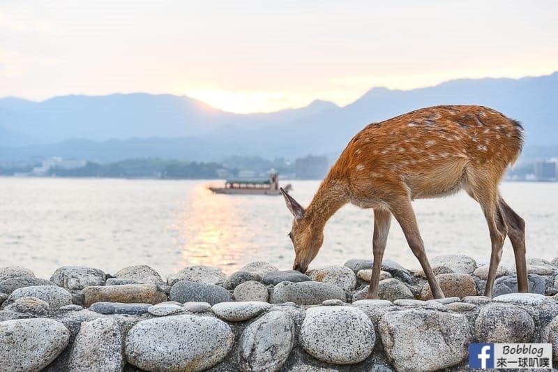 延伸閱讀:宮島鹿照片、可愛小鹿斑比