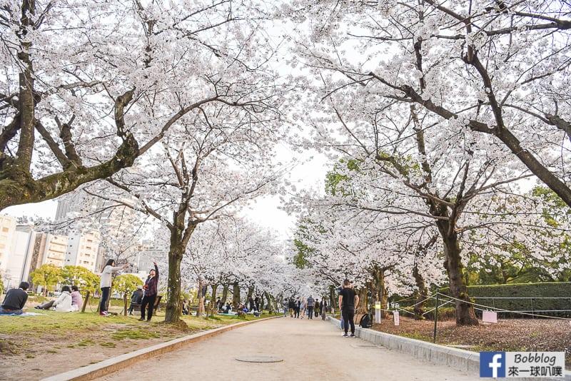 延伸閱讀:廣島和平紀念公園櫻花(300株櫻花,看原子彈爆炸遺跡)