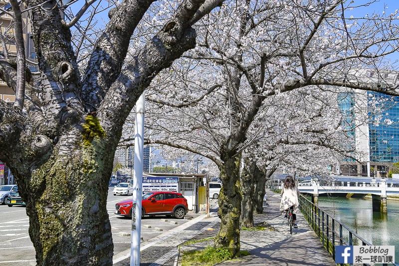 enkoh-bridge-sakura-10