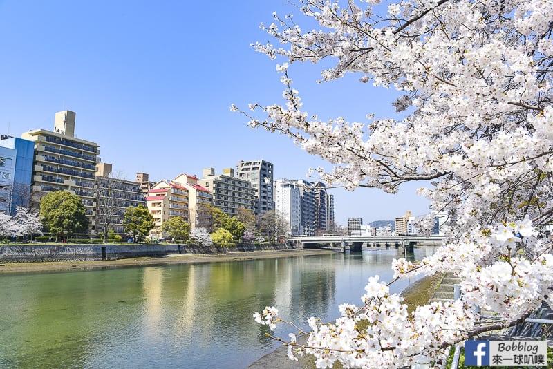 廣島櫻花-猿猴橋與猿猴川櫻花(廣島車站附近美麗櫻花)