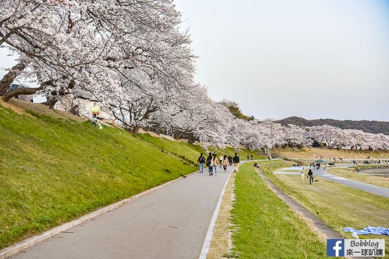 Asahi-River-Sakura-Road-14