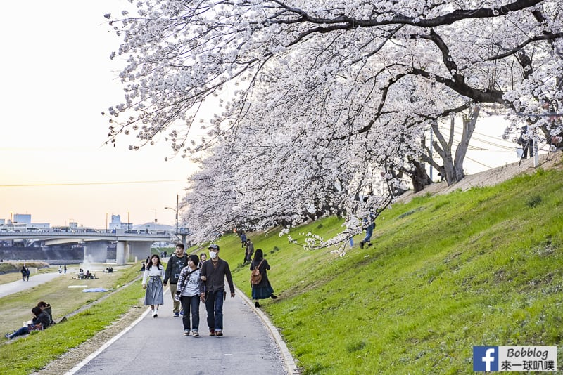 Asahi-River-Sakura-Road-16