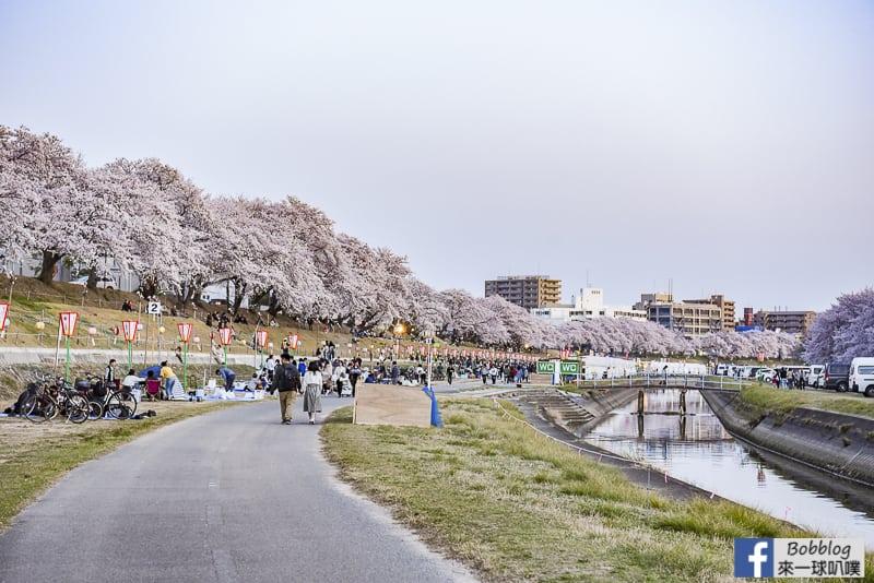 Asahi-River-Sakura-Road-19