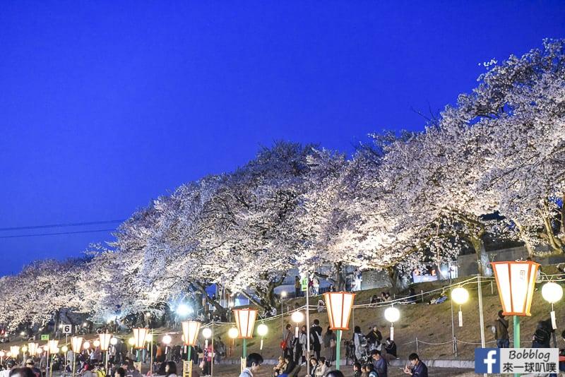 Asahi-River-Sakura-Road-29