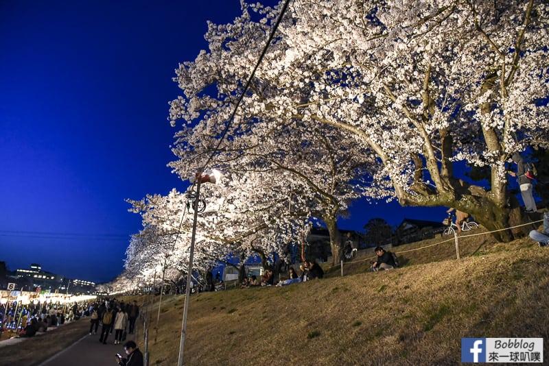 Asahi-River-Sakura-Road-31