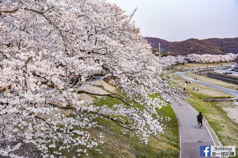 Asahi-River-Sakura-Road-5