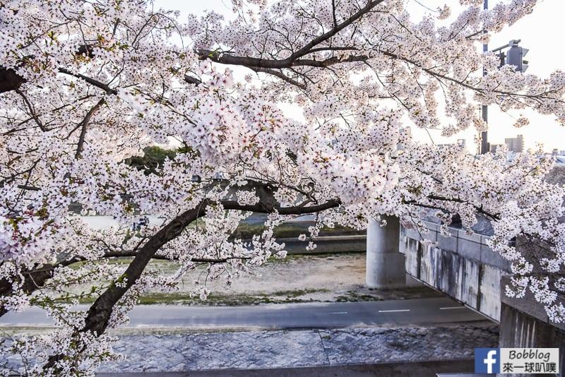 Asahi-River-Sakura-Road-7