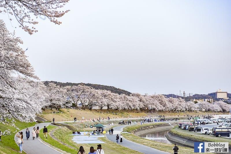 Asahi-River-Sakura-Road-15