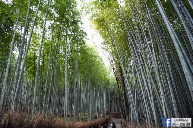 [京都嵐山]嵐山竹林小徑(超美竹林步道|嵐山人氣景點)