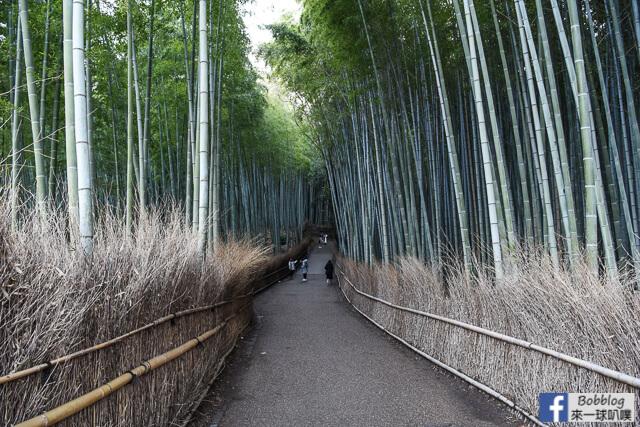延伸閱讀:[京都嵐山]嵐山竹林小徑(超美竹林步道|嵐山人氣景點)