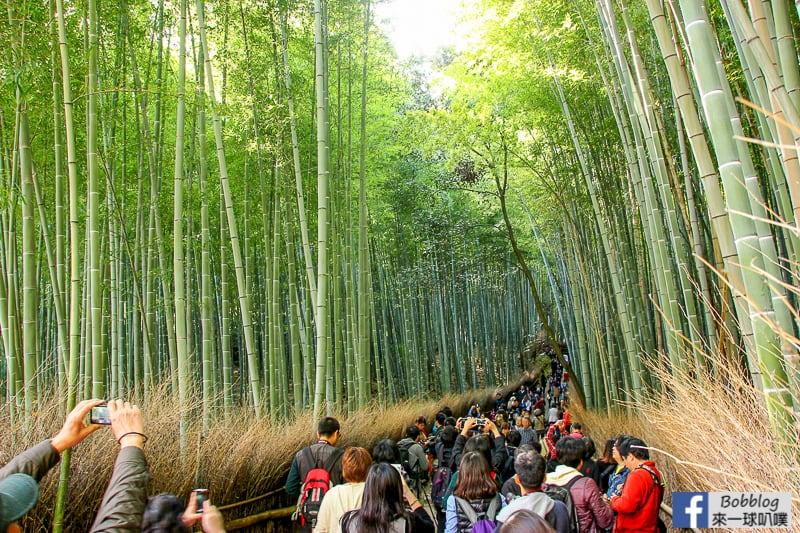 Arashiyama-Bamboo-Forest_-10