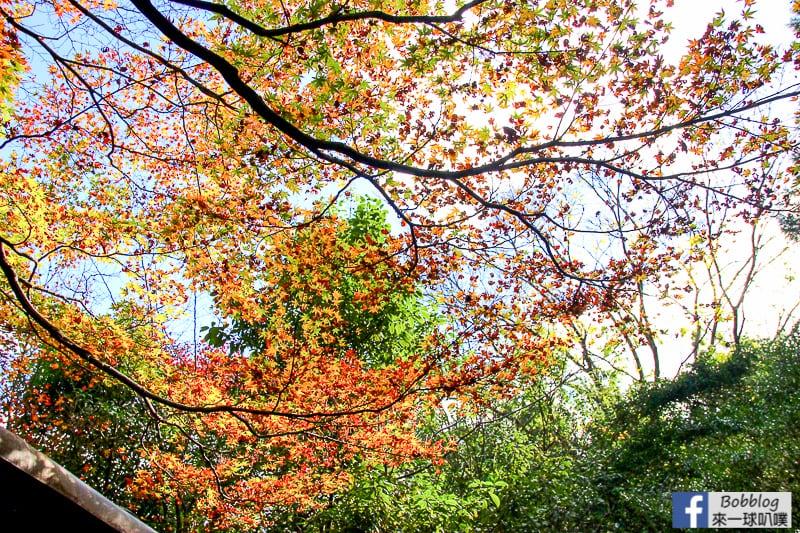 Arashiyama-Bamboo-Forest_-15