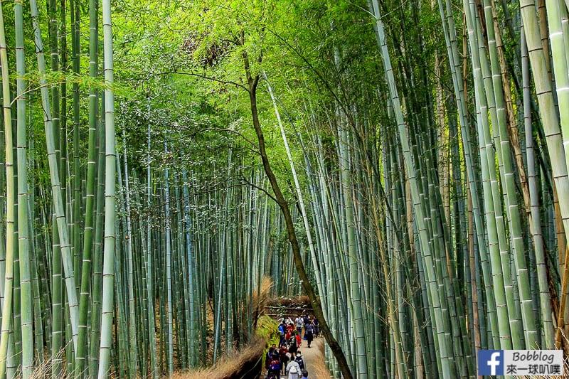 Arashiyama-Bamboo-Forest_-3