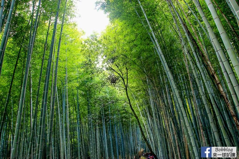 Arashiyama-Bamboo-Forest_-6