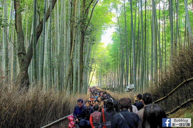 Arashiyama-Bamboo-Forest_-8