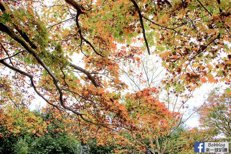 Arashiyama-park-14
