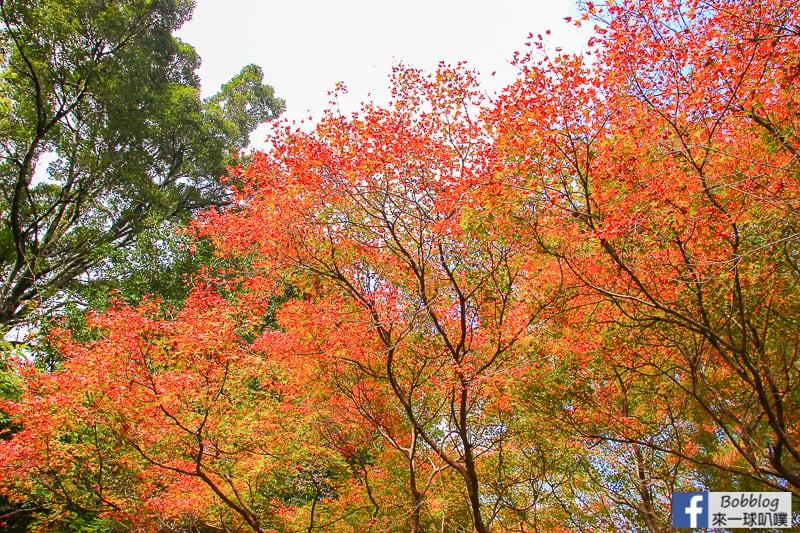 Arashiyama-park-23