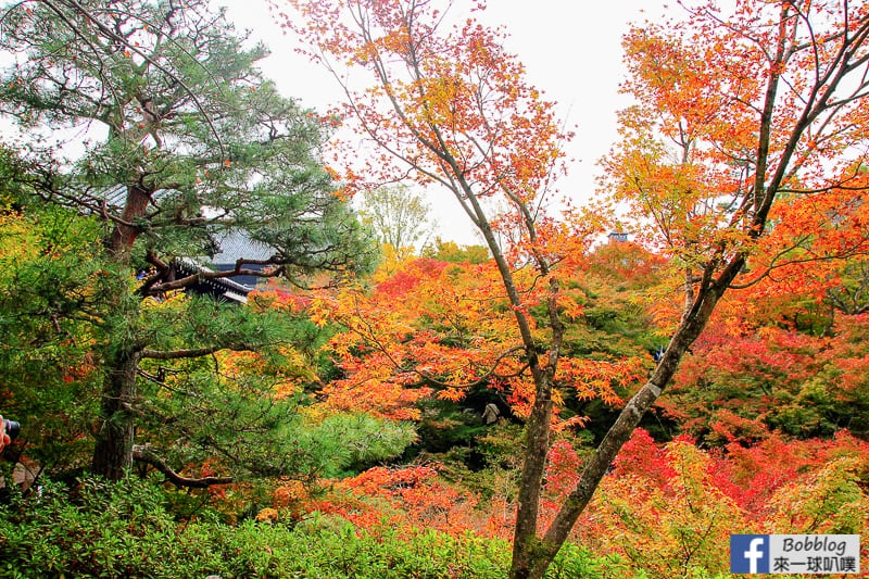 Tofukuji-Temple-53