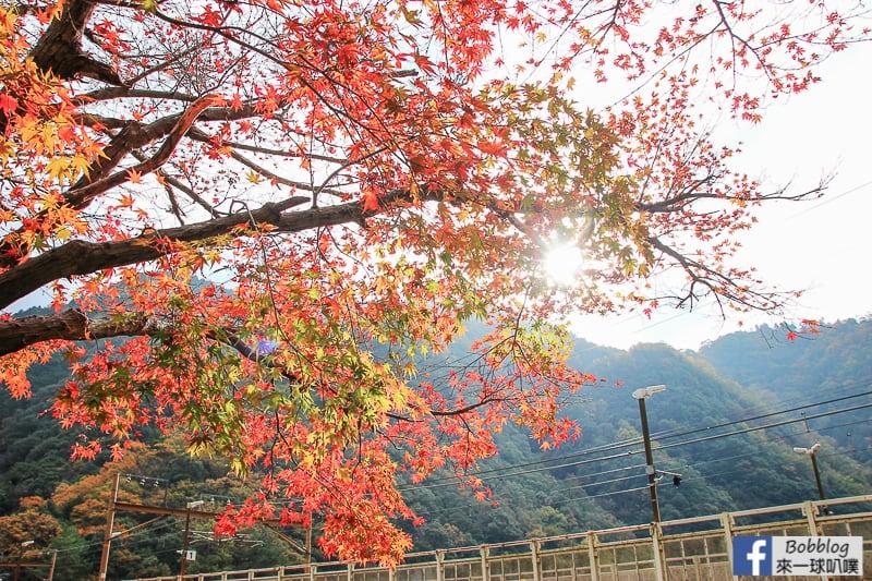 Hozukyo-station-maple-18