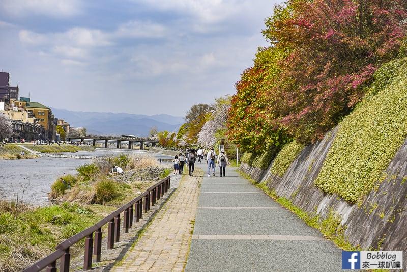 Kamogawa River sakura-12