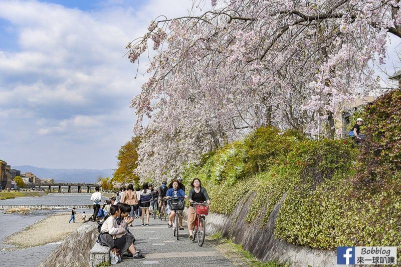 Kamogawa River sakura-15