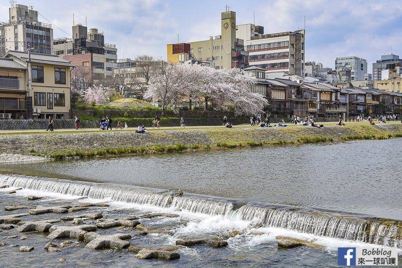 Kamogawa River sakura-21