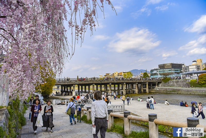Kamogawa River sakura-37