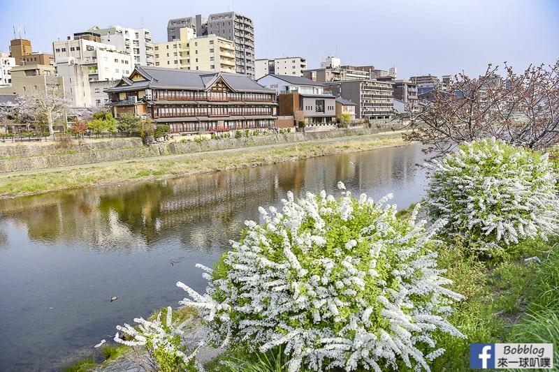 Kamogawa River sakura-42