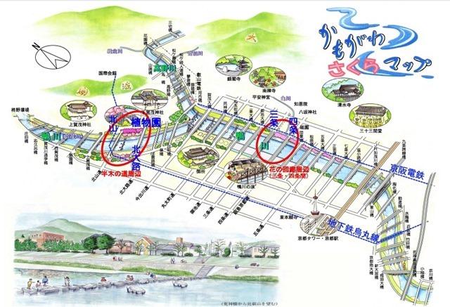 Kamogawa River sakura-48