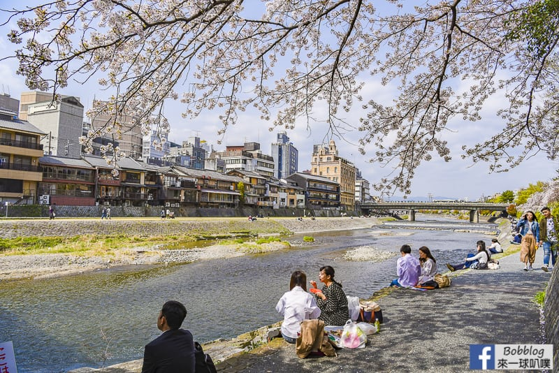 Kamogawa River sakura-5