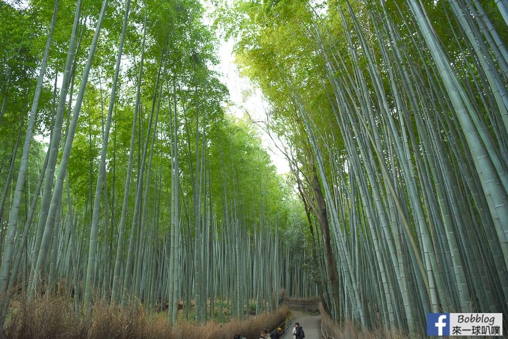 kyoto-arashiyama-bamboo-grove-20