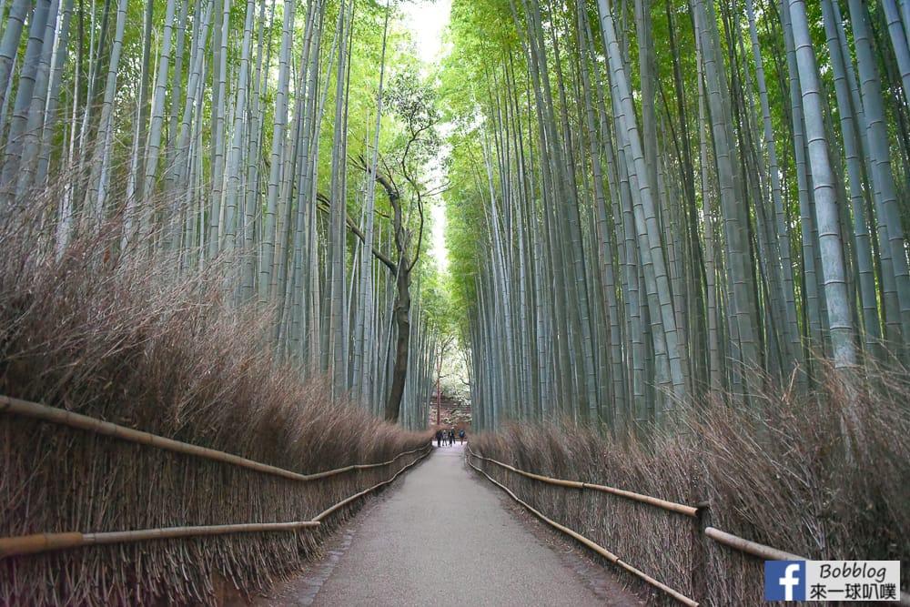 kyoto-arashiyama-bamboo-grove-22