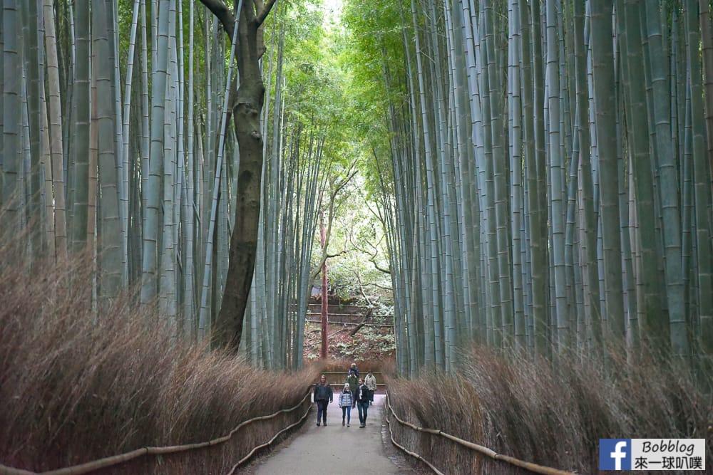 kyoto-arashiyama-bamboo-grove-23