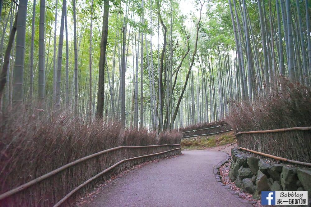kyoto-arashiyama-bamboo-grove-32