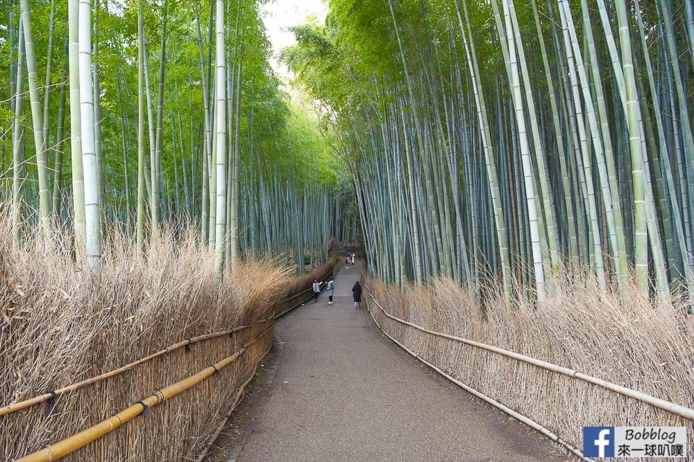 kyoto-arashiyama-bamboo-grove-5