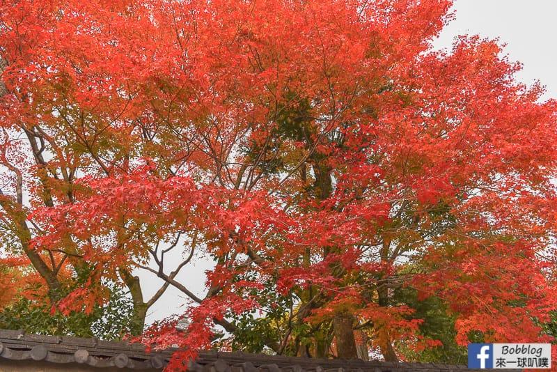 Shimogamo-Shrine-5