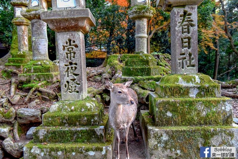 Kasuga-Taisha-Shrine-18