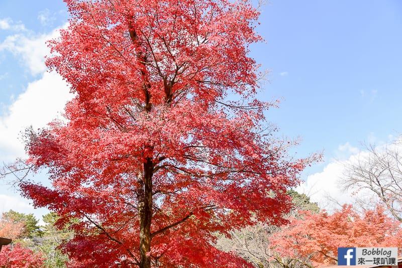 kyoto-daigoji-9