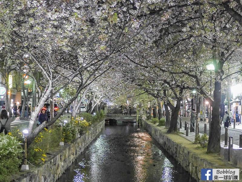 Takasegawa-night-sakura-11