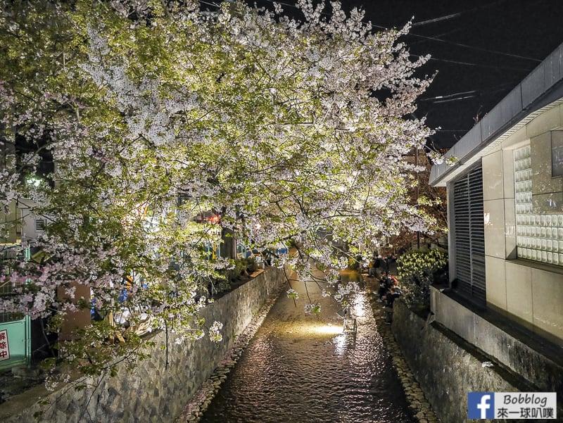 Takasegawa-night-sakura-14