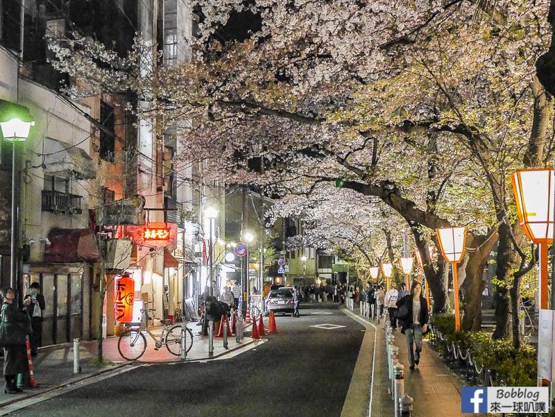 Takasegawa-night-sakura-16