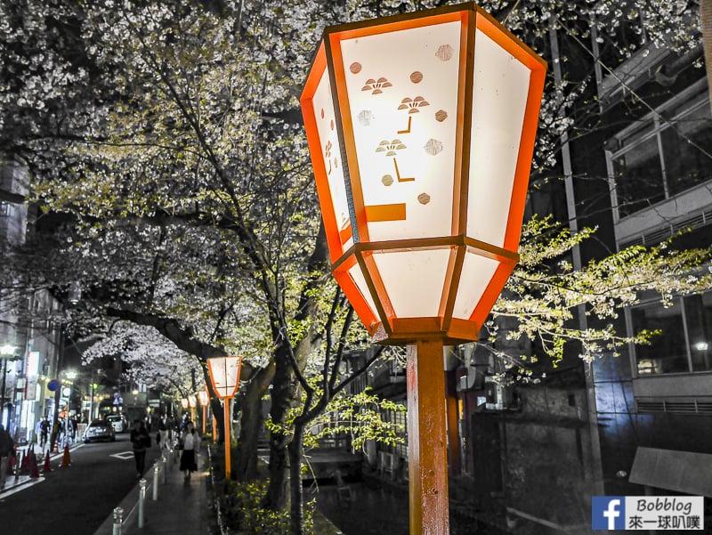 Takasegawa-night-sakura-17