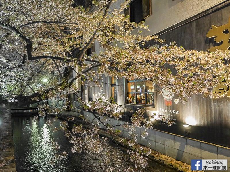 Takasegawa-night-sakura-2