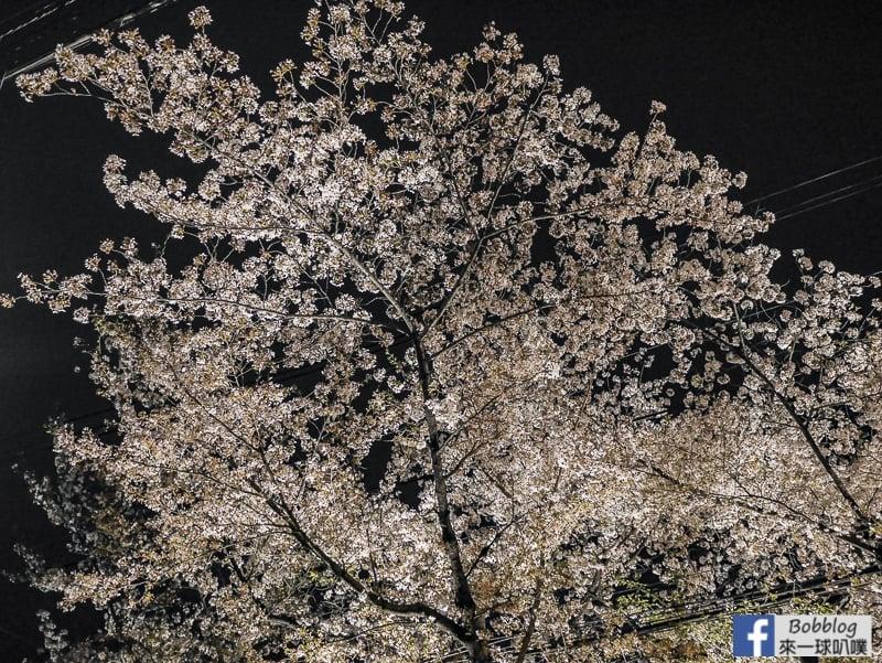 Takasegawa-night-sakura-22