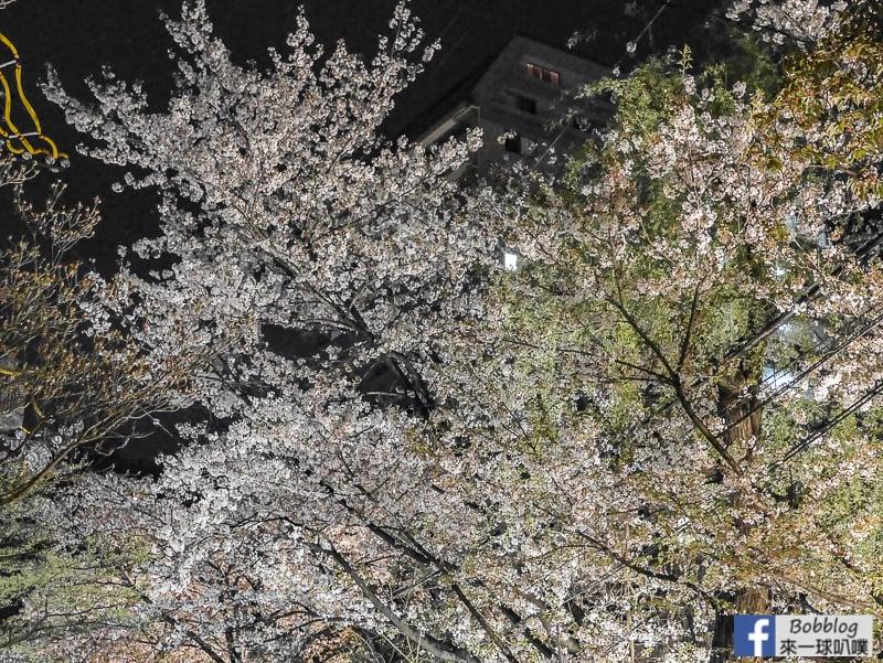 Takasegawa-night-sakura-24