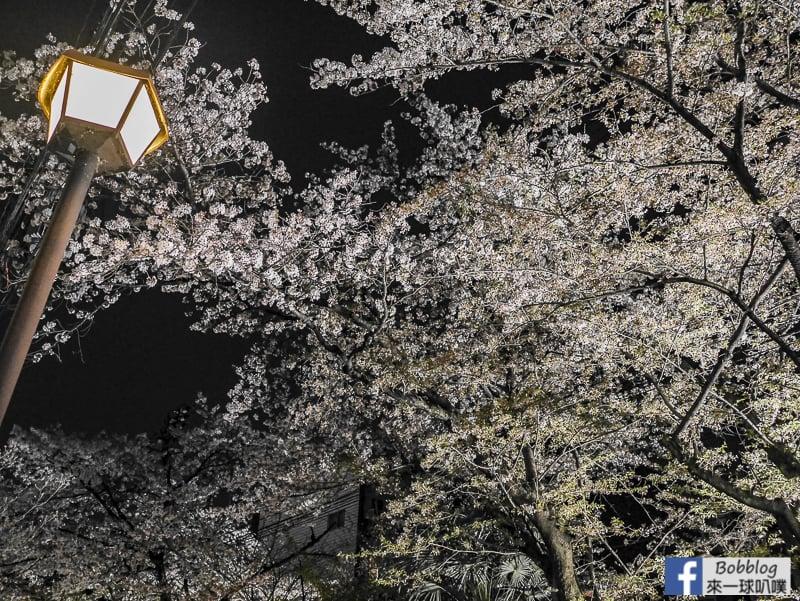 Takasegawa-night-sakura-25